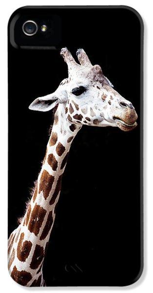 Giraffe IPhone 5s Case by Lauren Mancke