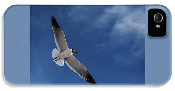 Glider IPhone 5s Case by Don Spenner