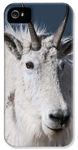 Goat Portrait IPhone 5s Case by Gary Lengyel