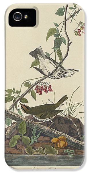 Golden-crowned Thrush IPhone 5s Case