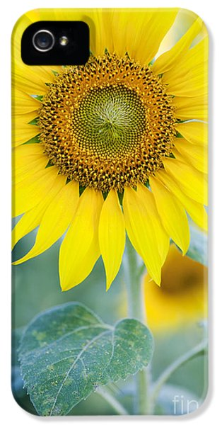 Golden Sunflower IPhone 5s Case by Tim Gainey
