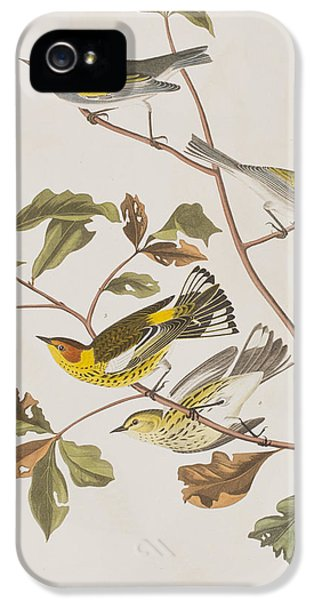 Golden Winged Warbler Or Cape May Warbler IPhone 5s Case by John James Audubon