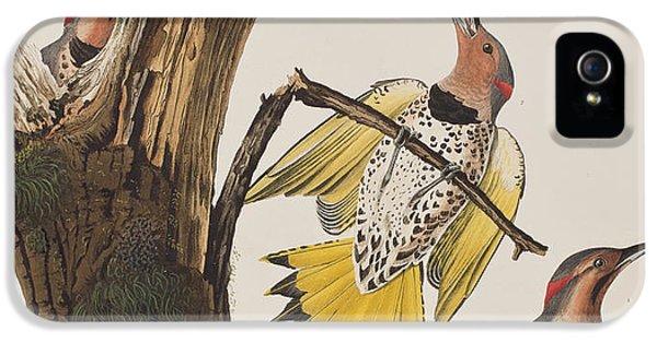 Golden-winged Woodpecker IPhone 5s Case by John James Audubon