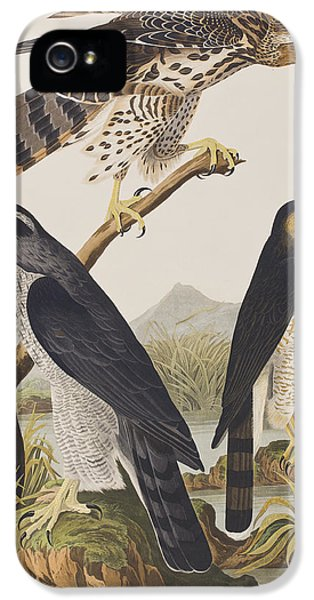 Goshawk And Stanley Hawk IPhone 5s Case