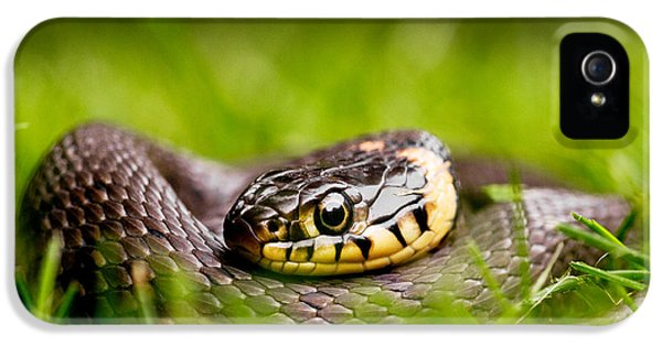 Grass Snake - Natrix Natrix IPhone 5s Case