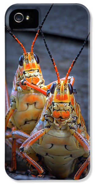 Grasshoppers In Love IPhone 5s Case
