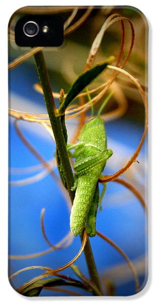 Grasshopper iPhone 5s Case - Grassy Hopper by Chris Brannen