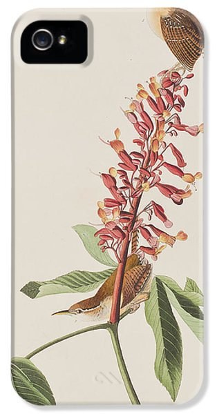 Great Carolina Wren IPhone 5s Case