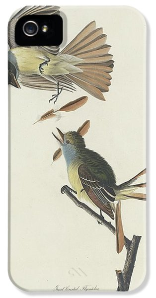 Flycatcher iPhone 5s Case - Great Crested Flycatcher by Dreyer Wildlife Print Collections