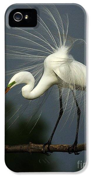 Majestic Great White Egret High Island Texas IPhone 5s Case by Bob Christopher