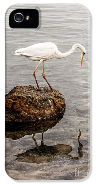 Great White Heron IPhone 5s Case