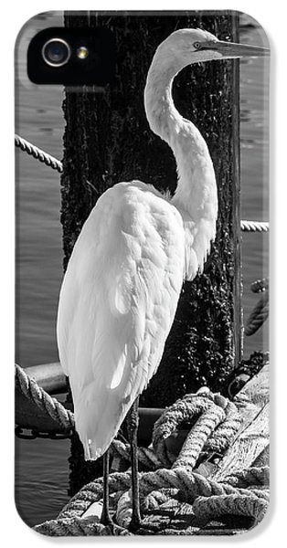 Great White Heron In Black And White IPhone 5s Case by Garry Gay