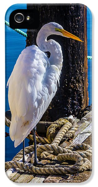 Great White Heron On Boat Dock IPhone 5s Case by Garry Gay