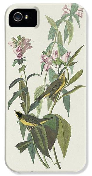 Flycatcher iPhone 5s Case - Green Black-capt Flycatcher by Dreyer Wildlife Print Collections