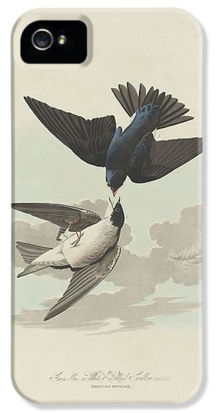 Green-blue Or White-bellied Swallow IPhone 5s Case by Dreyer Wildlife Print Collections