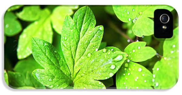 IPhone 5s Case featuring the photograph Green Leaves by Christina Rollo