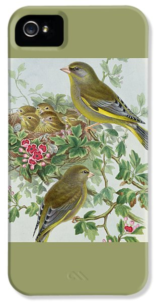Greenfinch IPhone 5s Case by John Gould