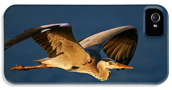 Heron iPhone 5s Case - Grey Heron In Flight by Johan Swanepoel