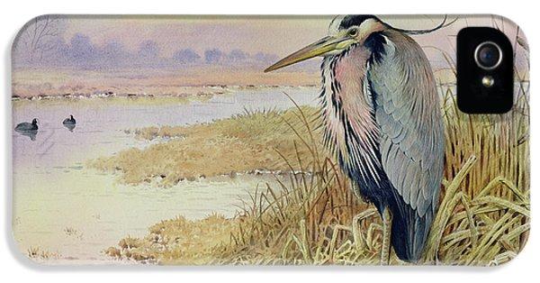 Grey Heron IPhone 5s Case by John James Audubon