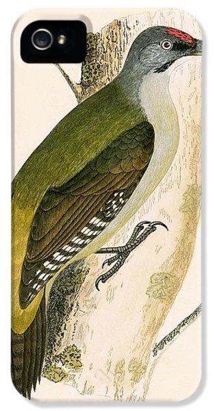 Grey Woodpecker IPhone 5s Case