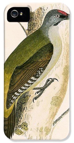 Grey Woodpecker IPhone 5s Case by English School