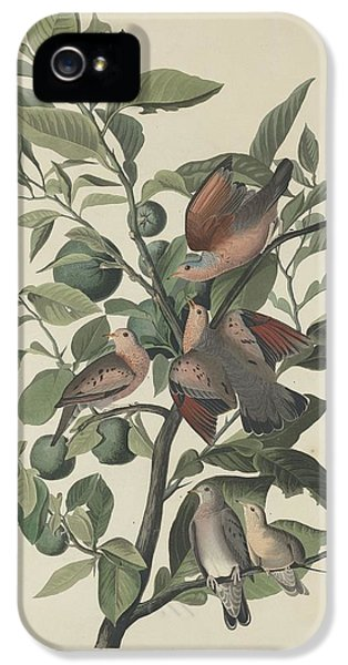Ground Dove IPhone 5s Case by Rob Dreyer