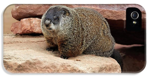 Groundhog IPhone 5s Case by Louise Heusinkveld