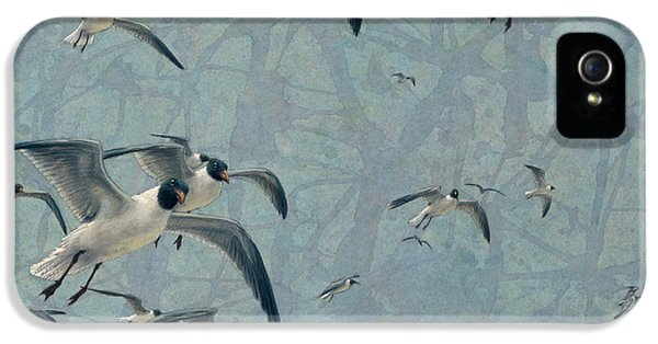Seagull iPhone 5s Case - Gulls by James W Johnson