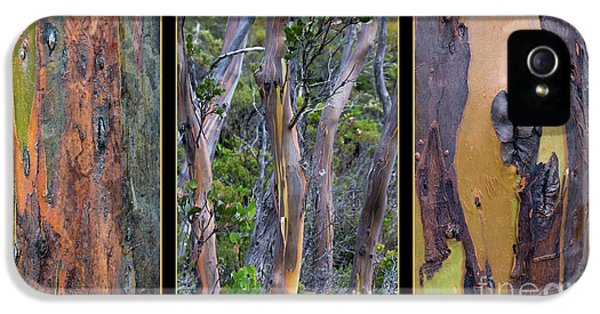 Gum Trees At Lake St Clair IPhone 5s Case by Werner Padarin