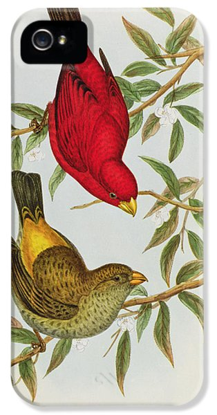 Haematospiza Sipahi IPhone 5s Case by John Gould