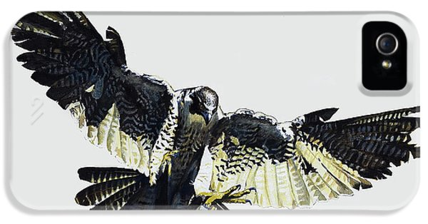 Buzzard iPhone 5s Case - Hawk by English School
