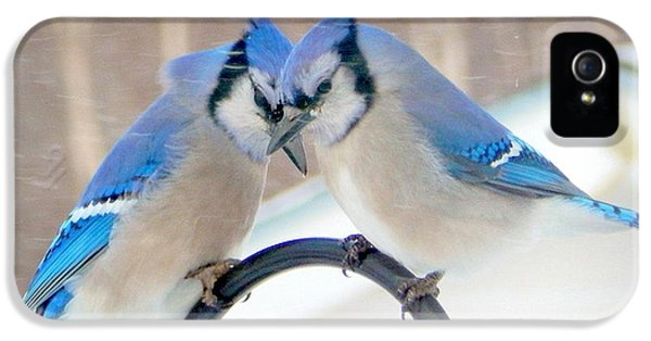 Bluejay iPhone 5s Case - Heart To Heart by Karen Cook