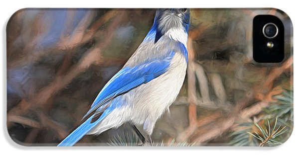 Bluejay iPhone 5s Case - Here's Looking At You,  Kid by Donna Kennedy