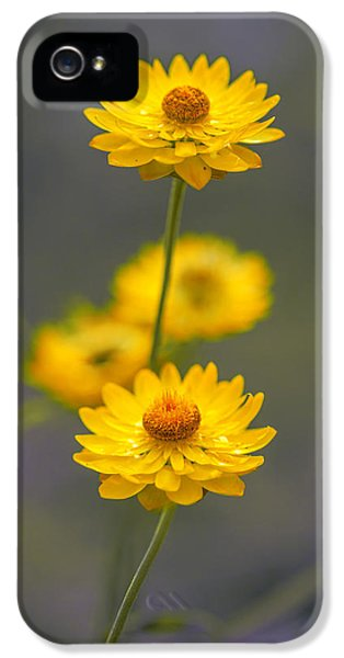 Hillflowers IPhone 5s Case