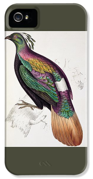 Himalayan Monal Pheasant IPhone 5s Case by John Gould