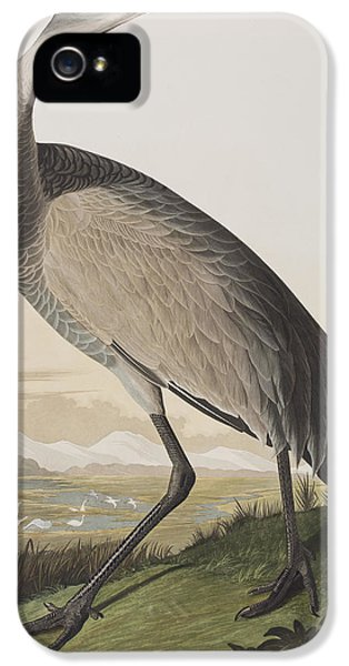 Hooping Crane IPhone 5s Case by John James Audubon