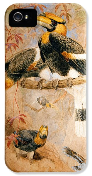 Hornbill iPhone 5s Case - Hornbill  by Joseph Wolf