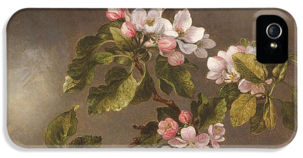 Humming Bird iPhone 5s Case - Hummingbird And Apple Blossoms by Martin Johnson Heade