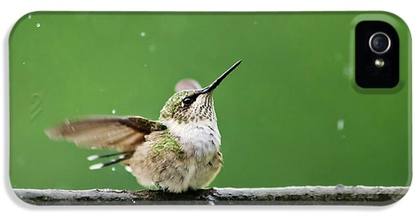 Humming Bird iPhone 5s Case - Hummingbird In The Rain by Christina Rollo