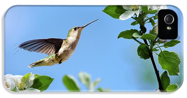Hummingbird Springtime IPhone 5s Case