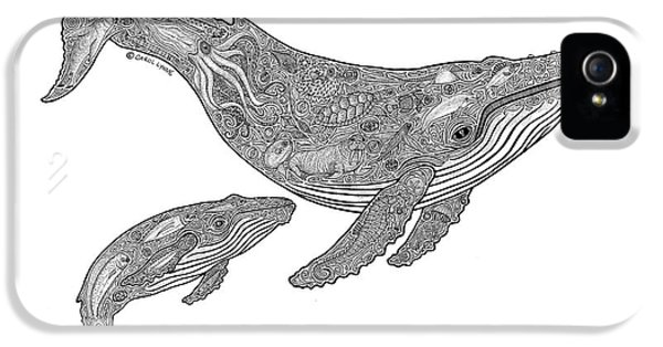 Humpback And Calf IPhone 5s Case by Carol Lynne
