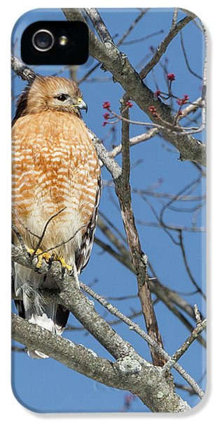 IPhone 5s Case featuring the photograph Hunting by Bill Wakeley