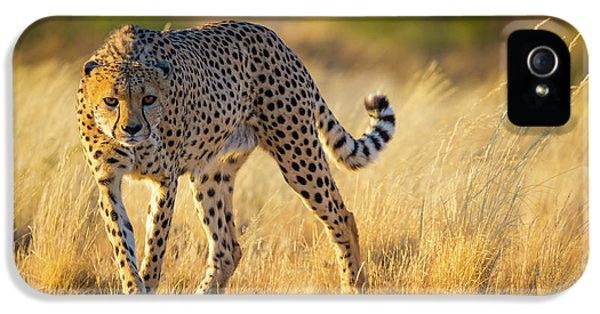 Hunting Cheetah IPhone 5s Case by Inge Johnsson
