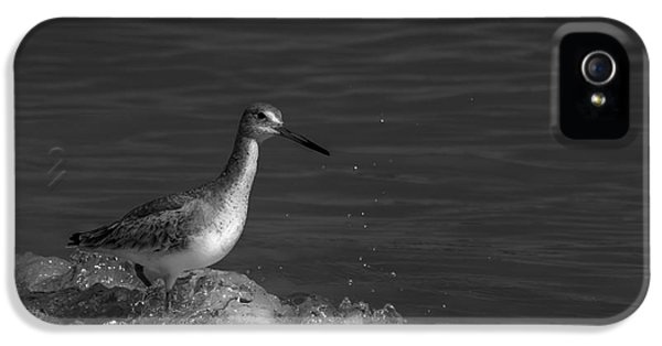 Sandpiper iPhone 5s Case - I Can Make It - Bw by Marvin Spates