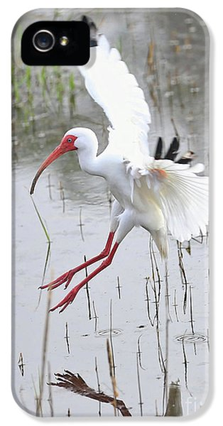 Ibis Soft Water Landing IPhone 5s Case by Carol Groenen