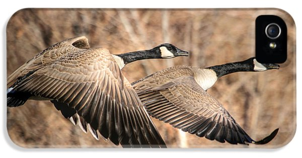 Goose iPhone 5s Case - I'm Right Behind Ya by Donna Kennedy