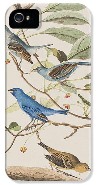 Indigo Bird IPhone 5s Case by John James Audubon