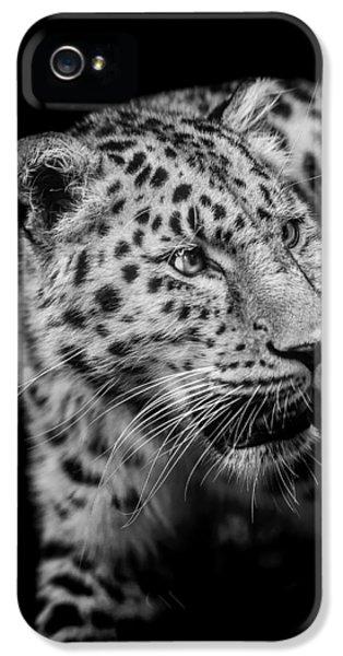 Leopard iPhone 5s Case - Intent by Paul Neville