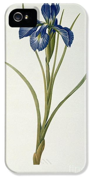 Iris Xyphioides IPhone 5s Case by Pierre Joseph Redoute