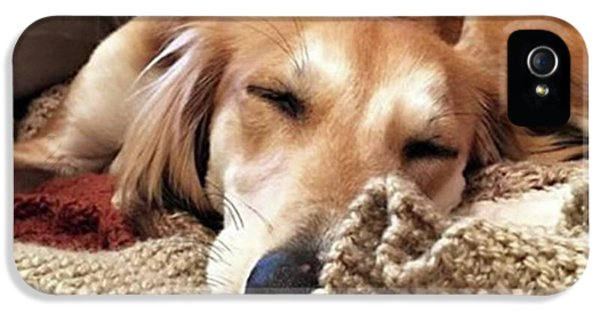 iPhone 5s Case - It's Been A Hard Day...  #saluki by John Edwards
